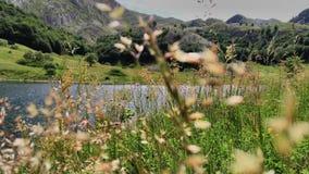 Vista del lago da erba alta Fotografia Stock Libera da Diritti