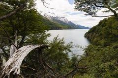 Vista del lago del Desierto dal legno Fotografie Stock