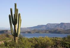 Vista del lago desert Fotografia Stock Libera da Diritti