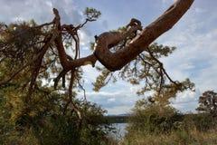 Vista del lago e di vecchio albero 11 Immagini Stock