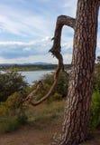 Vista del lago e di vecchio albero 8 Fotografia Stock