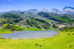 Vista del lago Ercina di estate Immagini Stock Libere da Diritti