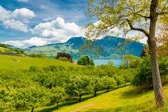 Vista del lago nelle montagne delle alpi, Svizzera Thun Fotografia Stock
