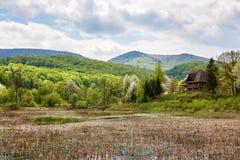 Vista del lago overgrown en montañas cárpatas Imágenes de archivo libres de regalías