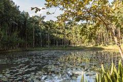 Vista del lago park de Malwee Jaragua hace Sul Santa Catarina foto de archivo