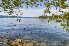Vista del lago zurich Fotografia Stock