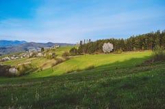 Vista del legno e delle montagne Fotografia Stock