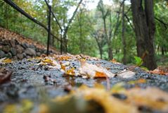 Vista del livello del suolo delle foglie bagnate su una ferrovia nel legno Fotografia Stock