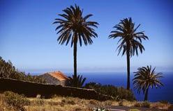Vista del mare del gruppo della palma Fotografie Stock Libere da Diritti