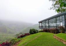 Vista del negozio del tè e delle piantagioni di tè coperti di nebbia Immagine Stock