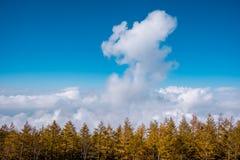Vista del paesaggio dalla montagna di Fuji Mare di nubi immagine stock