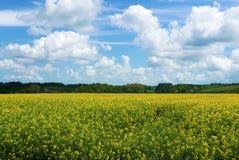 Vista del paesaggio dei fiori della violenza Fotografie Stock Libere da Diritti