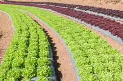 Vista del paesaggio del campo del terrazzo di agricoltura Fotografia Stock