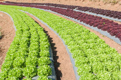 Vista del paesaggio del campo del terrazzo di agricoltura Fotografia Stock Libera da Diritti