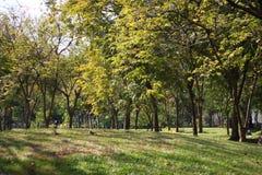 Vista del paesaggio del parco pubblico di mattina immagine stock