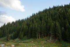 Vista del paesaggio della montagna nel Kirghizistan Erba verde e foresta nella vista della valle della montagna fotografie stock libere da diritti