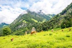 Vista del paesaggio dello svizzero Fotografia Stock Libera da Diritti