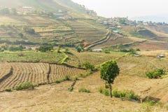 Vista del paesaggio di area coltivata sulla montagna Fotografia Stock