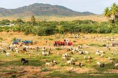 Vista del paesaggio rurale indiano, Puttaparthi, Andhra Pradesh, India Copi lo spazio per testo fotografia stock