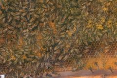 Vista del panal de una colmena Fotos de archivo