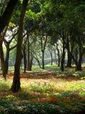 Vista del parco Fotografia Stock Libera da Diritti