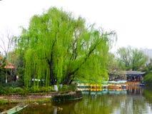 Vista del parco del lago Fotografie Stock Libere da Diritti