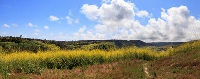 Vista del parco della regione selvaggia di Aliso Viejo Fotografie Stock