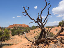 Vista del parco nazionale del bacino di Kodachrome con legno morto nella priorità alta Immagini Stock Libere da Diritti