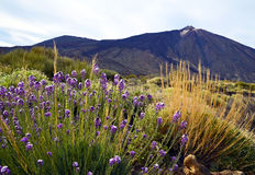 Vista del parque nacional de Teide en Tenerife, islas Canarias, España Imagenes de archivo