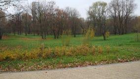 Vista del parque del otoño con la hierba verde y de árboles sin las hojas almacen de video