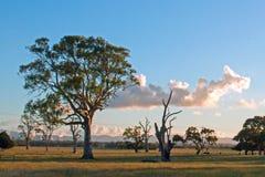 Vista del pascolo della latteria di tramonto del Glengarry vivere e degli alberi di eucalyptus morti in Victoria Australia Immagini Stock Libere da Diritti