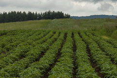 Vista del patata-campo, della radura e del hurst su una cima alla montagna di Plana Fotografie Stock Libere da Diritti