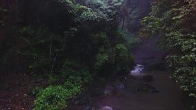 Vista del pequeño río corriente de la colina rodeada por los árboles y los arbustos de la sombra almacen de metraje de vídeo