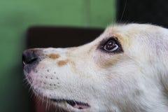 Vista del perro Foto de archivo libre de regalías