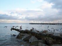 Vista del pilastro e del Mar Baltico Immagine Stock Libera da Diritti