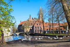 Vista del ponte e del canale, cigni bianchi, torre di chiesa a Bruges, Belguim Immagini Stock