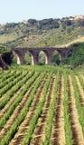 Vista del ponticello e della serra di viti Immagine Stock Libera da Diritti