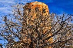 Vista del posto di guardia in Grand Canyon con la priorità alta asciutta dell'albero Fotografie Stock Libere da Diritti