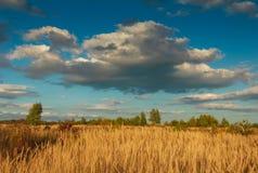Vista del prato del paesaggio di autunno con erba alta Immagine Stock Libera da Diritti