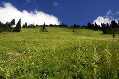 Vista del prato della montagna Fotografia Stock