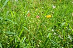 Vista del primo piano ad un prato di fioritura di verde di foresta di estate in un giorno soleggiato immagine stock libera da diritti