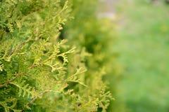 Vista del primo piano dei cespugli verdi in giardino botanico Immagini Stock Libere da Diritti