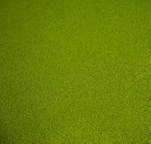 Erba verde artificiale Immagine Stock