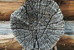 Vista del primo piano dell'albero del taglio Fotografia Stock Libera da Diritti