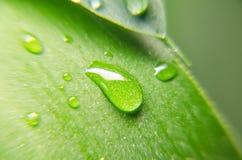 Vista del primo piano della foglia verde Fotografia Stock Libera da Diritti