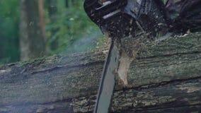 Vista del primo piano di segare l'albero con la motosega lentamente video d archivio