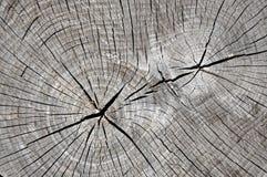 Vista del primo piano di struttura di legno granulare Immagine Stock Libera da Diritti