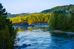 Vista del río ancho, de las montañas cubiertas con los bosques, y de la isla rocosa Altai, Katun Fotos de archivo libres de regalías