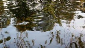 Vista del río con las ondas naturales y la reflexión almacen de metraje de vídeo