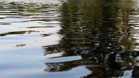 Vista del río con las ondas naturales y la reflexión almacen de video